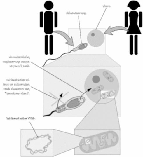 En quoi consiste la thérapie génique?