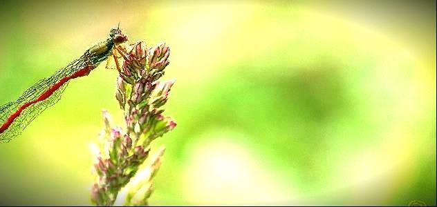 Les allergies de l'été, comment y rédier ?